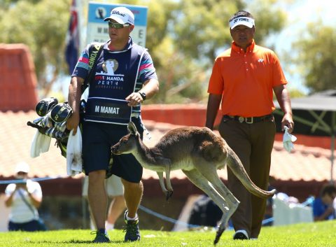 PERTH, AUSTRALIA - FEBRUARY 25: A kangaroo jumps accross the 10th fairway in front of Mardan Mamat of Singapore during day one of the 2016 Perth International at Lake Karrinyup GC on February 25, 2016 in Perth, Australia. (Photo by Paul Kane/Getty Images)