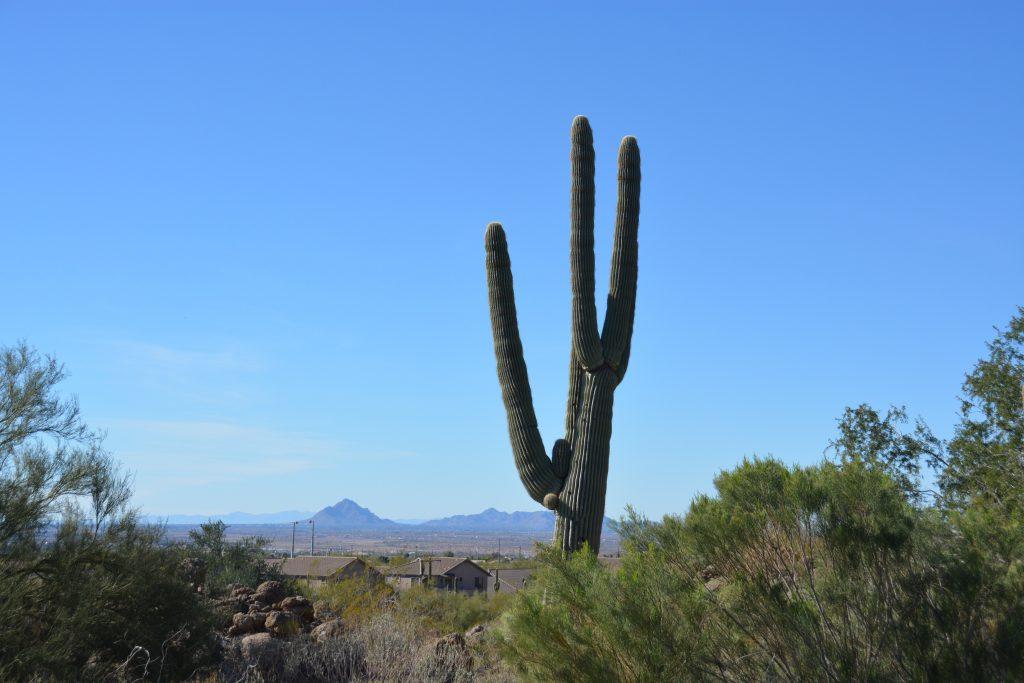 Blick von Grün 4 Richtung Valley of the Sun im Las Sendas Golf Club. Foto: I.v.Wilcke